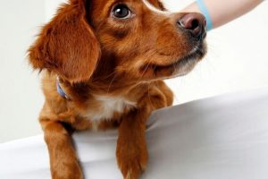 rassurer chien veterinaire