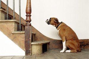 pourquoi mon chien ne monte pas les escaliers