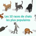 le chat le plus populaire du web