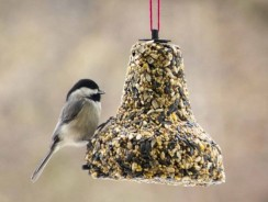 Votre oiseau obtient-il assez de calcium ?