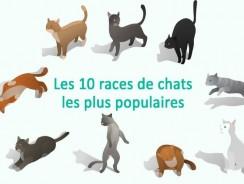 Les 10 races de chats les plus populaires